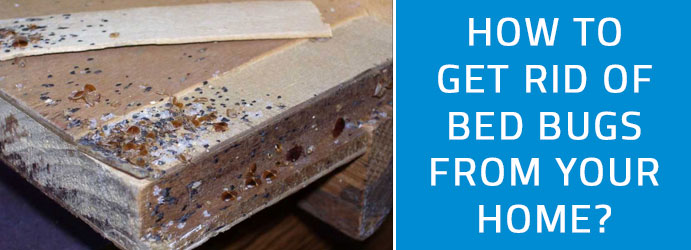 How to Get Rid of Bed Bugs From Your Home?