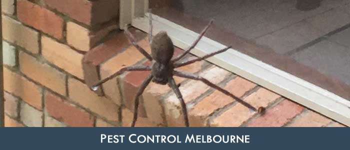 Same Day Pest Control Benloch