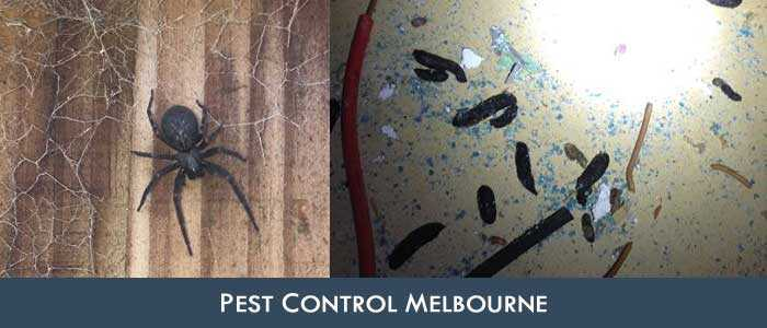 Pest Control Sandridge