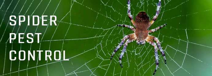 Spider Pest Control Archerfield