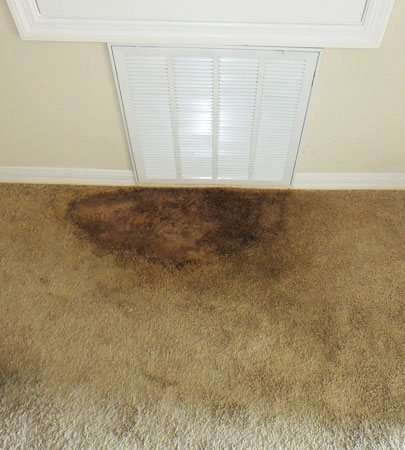Carpet Mould Removal Brisbane