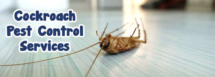 Cockroach Pest Control Perth