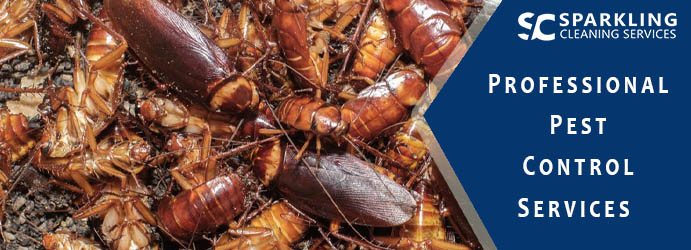 Professional Pest Control Services