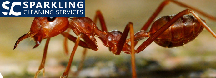 Red Ant Pest Control