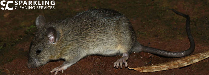 Rat Pest Control North Tumbulgum