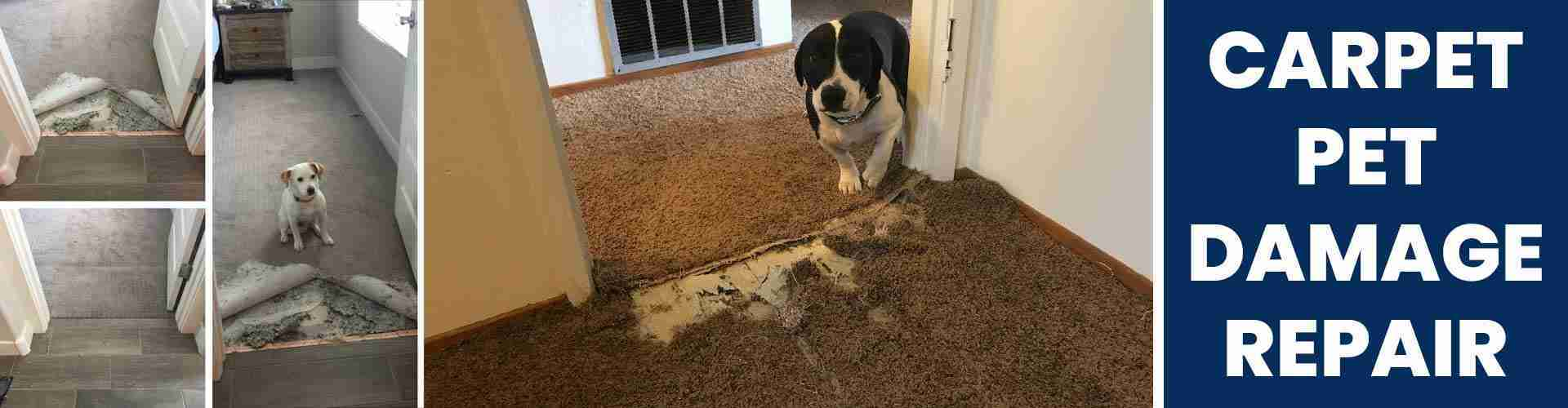 Carpet Pet Damage Repair Perth