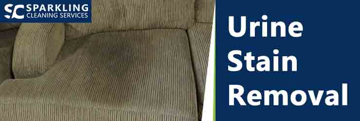 Upholstery Urine Stain Removal