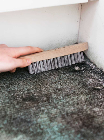 Carpet Mould Removal Kedron