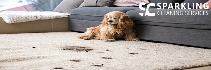 Carpet Stains Removal Service